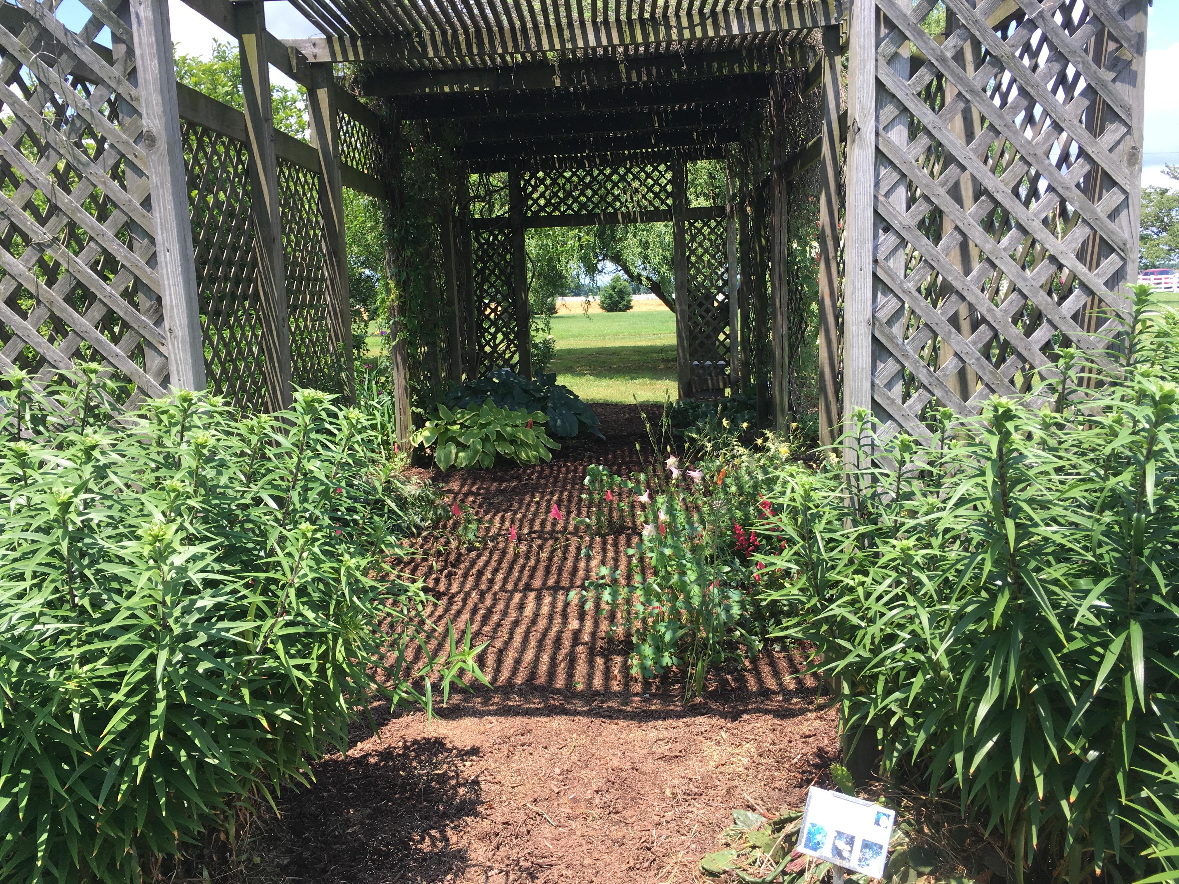 MG Garden3