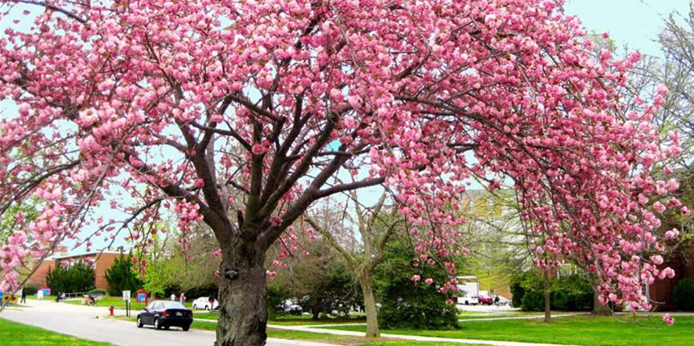 DSU Arboretum